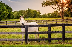 Equine Fence Building Horse
