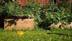 8-31-19-Garden-Vegetable309199540