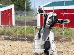 Fence Types Livestock Species