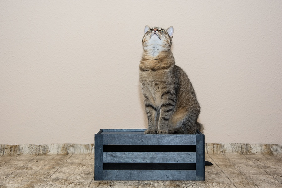 bigstock-Cat-Portrait-98480255